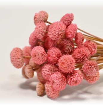 Botao Light Pink Bunch