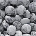 Lentilles grijs